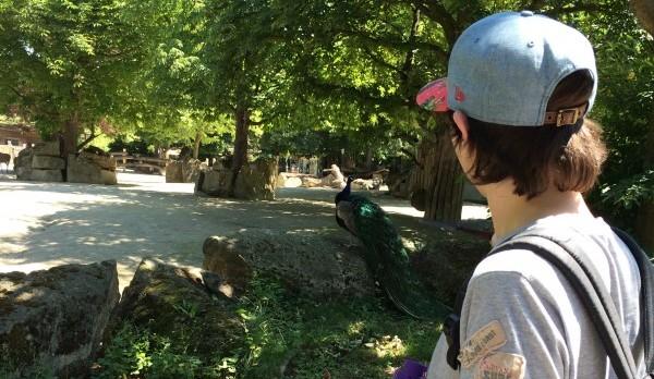 Wo lebt das Panzernashorn? In Schönbrunn?